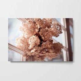 hortensia dried flowers hanging Metal Print