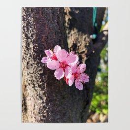 South Portland Spring 2018 (2) Poster