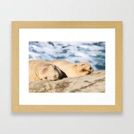 Sleepy Sea Lion Framed Art Print