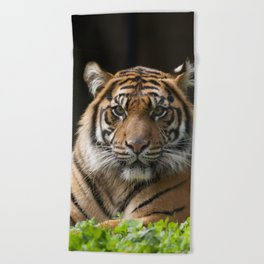 Look into my eyes by Teresa Thompson Beach Towel
