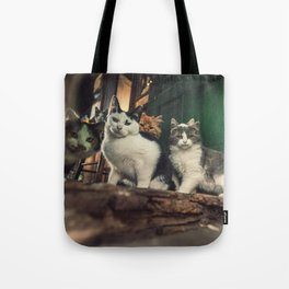 Family of Cats Tote Bag