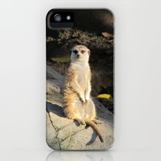 Meerkat Slim Case iPhone (5, 5s)