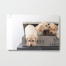 Labrador Puppies in a suitcase Metal Print