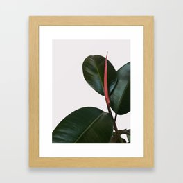 New Growth Framed Art Print