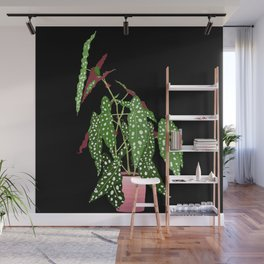 Polka Dot Begonia Potted Plant in Black Wall Mural