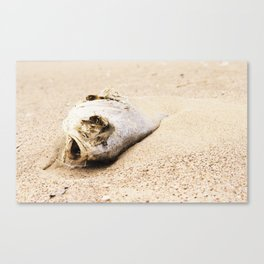 fish carcass Canvas Print