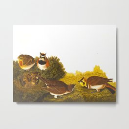 Shore Lark Bird Metal Print