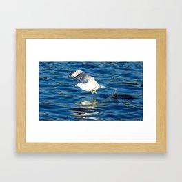 """Seagull's Takeoff"" Framed Art Print"