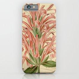 Flower 3383 justicia carnea Flesh coloured Justicia1 iPhone Case