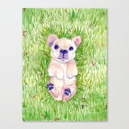 French Bulldog Puppy Canvas Print