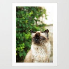 Kittycat2 Art Print