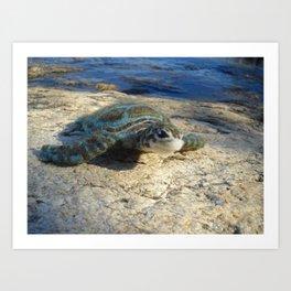 Green Sea Turtle Wool Sculpture Art Print