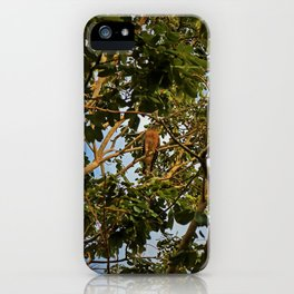 First of the Forest iPhone Case