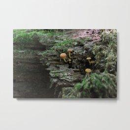 Orange Mushrooms Metal Print