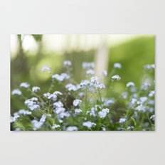 forget me not. Canvas Print