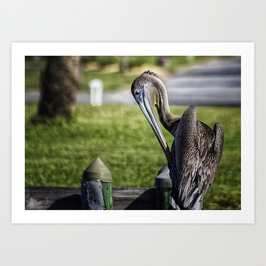 Pelican Itch Art Print