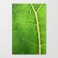 Fiddle Leaf Ficus Tree Canvas Print