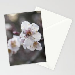 The Early Cherry Blossom Stationery Cards