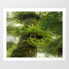 Bromeliads up a Sierra Palm in El Yunque rainforest PR Art Print