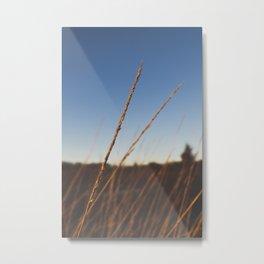 winter vegetation Metal Print
