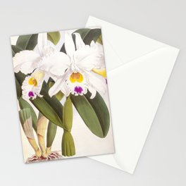 Vintage White Lindenia Orchid Stationery Cards