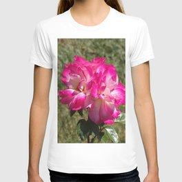 Beautiful Rainbow Sherbet Rose, Single Rose, Pink Flower T-shirt