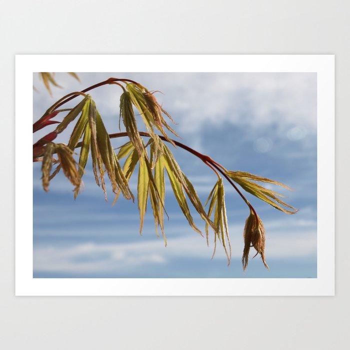 ACER TREE BRANCH IN SPRING Art Print