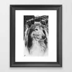 Rough Collie Dog Framed Art Print