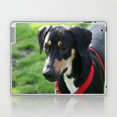 Doberman Laptop & iPad Skin