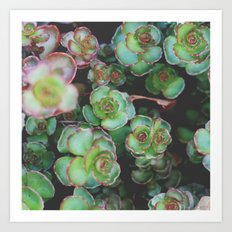 Succulents II Art Print