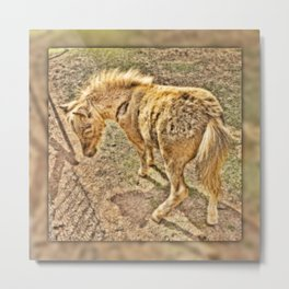Young miniature horse Metal Print