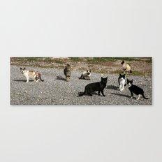Seven cats Canvas Print