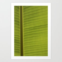 Banana Leaf II Art Print