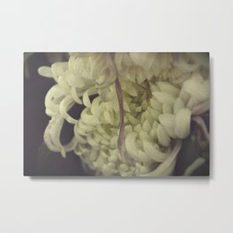 Romantic Chrysanthemum Metal Print