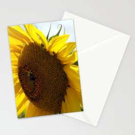 Sunflower3 Stationery Cards