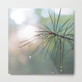 The Scent of Pine in the Morning - Nature Photography Metal Print