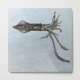 Longfin Squid Metal Print