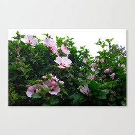 Blooming Light Canvas Print