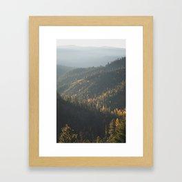 Larches Framed Art Print