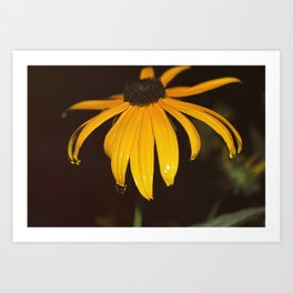 Night Flower Art Print