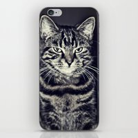 austin iPhone & iPod Skins featuring Austin by Rachel's Pet Portraits