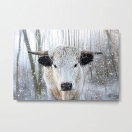 WhitePark Cow Metal Print