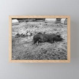 Black & White Pigs on the Farm Framed Mini Art Print