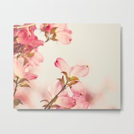 Dogwood Spring Flower Photography, Pink Coral Salmon, Floral Nature Tree Branch, Blossoms Metal Print