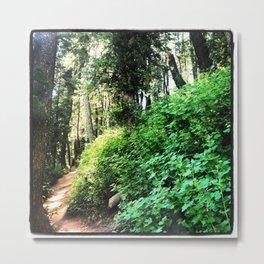 Stewart Falls Trail Metal Print
