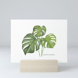 Monstera deliciosa 3 Leaves Mini Art Print