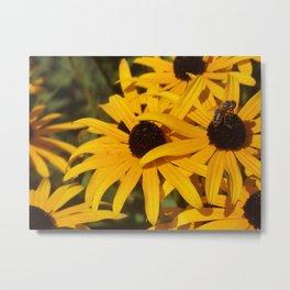 Bee & Autumn Yellow Flowers Metal Print