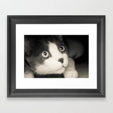 What do you think Mr Cat? Framed Art Print