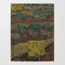 Olive Trees on a Hillside Poster