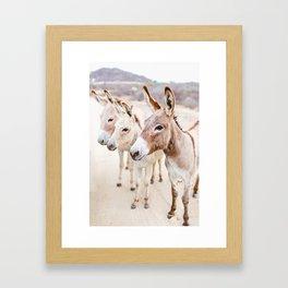 Three Donkeys in Baja, Mexico Framed Art Print